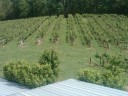 frogtown-cellars-atlanta-wine-tasting9